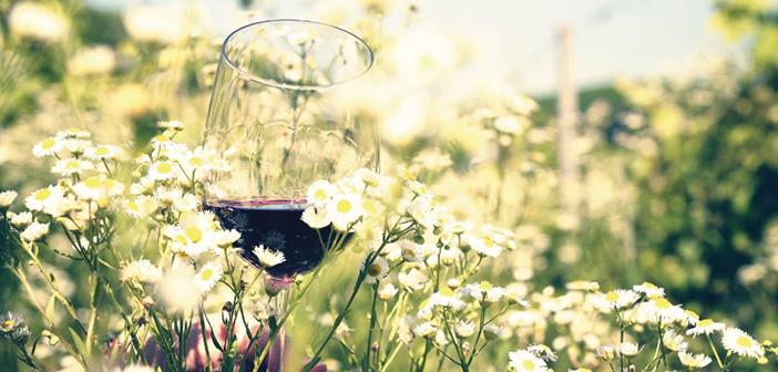 Wine tasting d'eccezione nel progetto vino di Collisioni