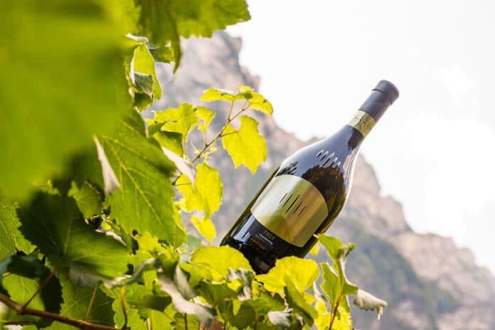 Chardonnay Troy Cantina Tramin
