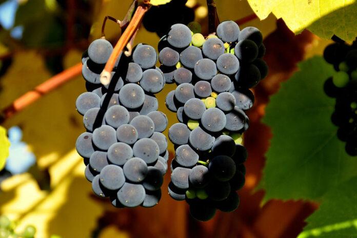 Grappolo uva