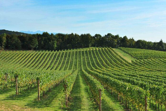 Consorzio del Pinot grigio delle Venezie DOC