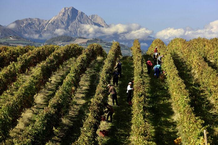 consorzio vini abruzzo