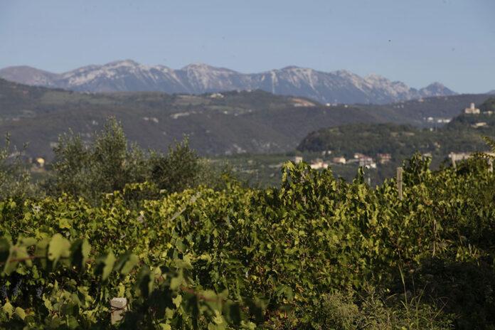 vigne valpolicella superiore brigaldara