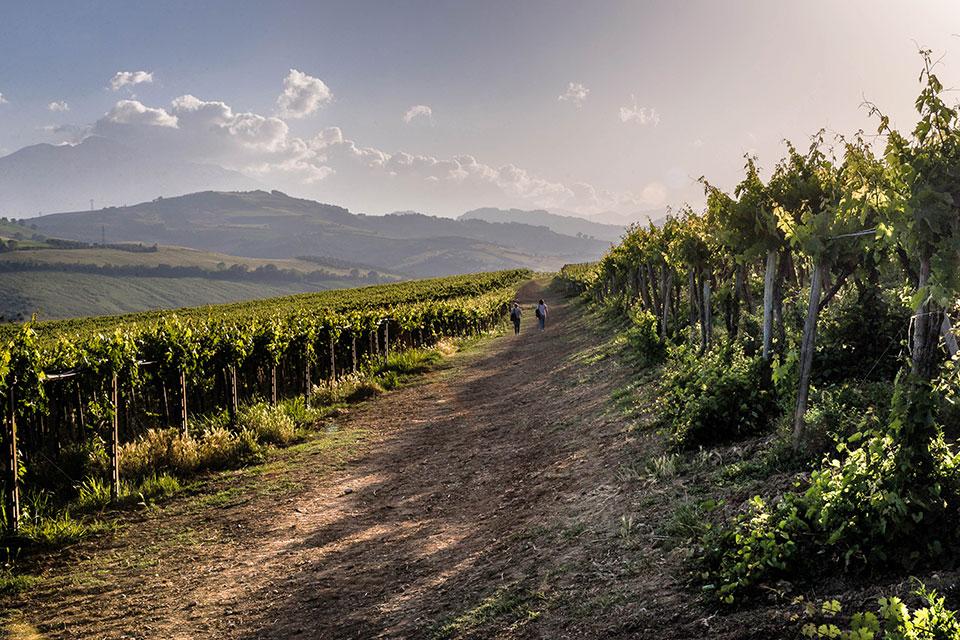 Percorsi Abruzzo Wine Experience