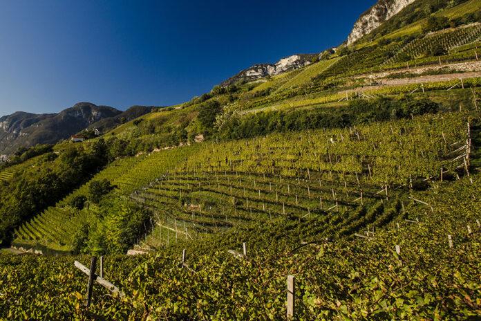 Vigneti in Alto Adige